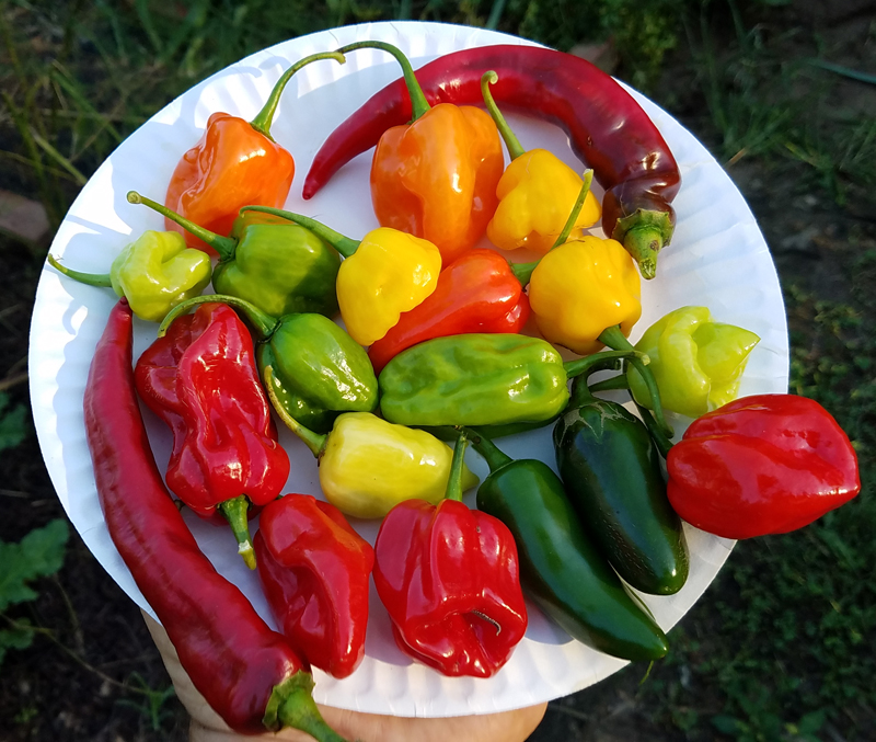 seasoningpeppers2