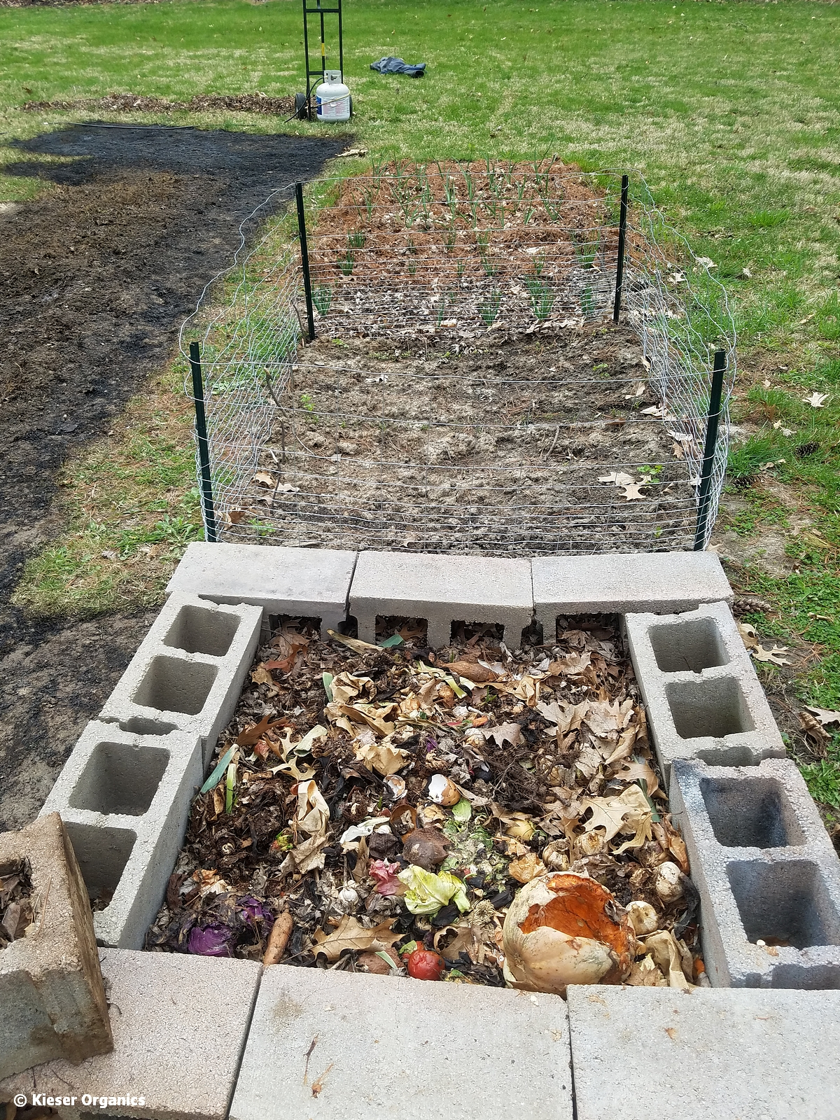 fbbob_last fall planting and worm bed compost pile